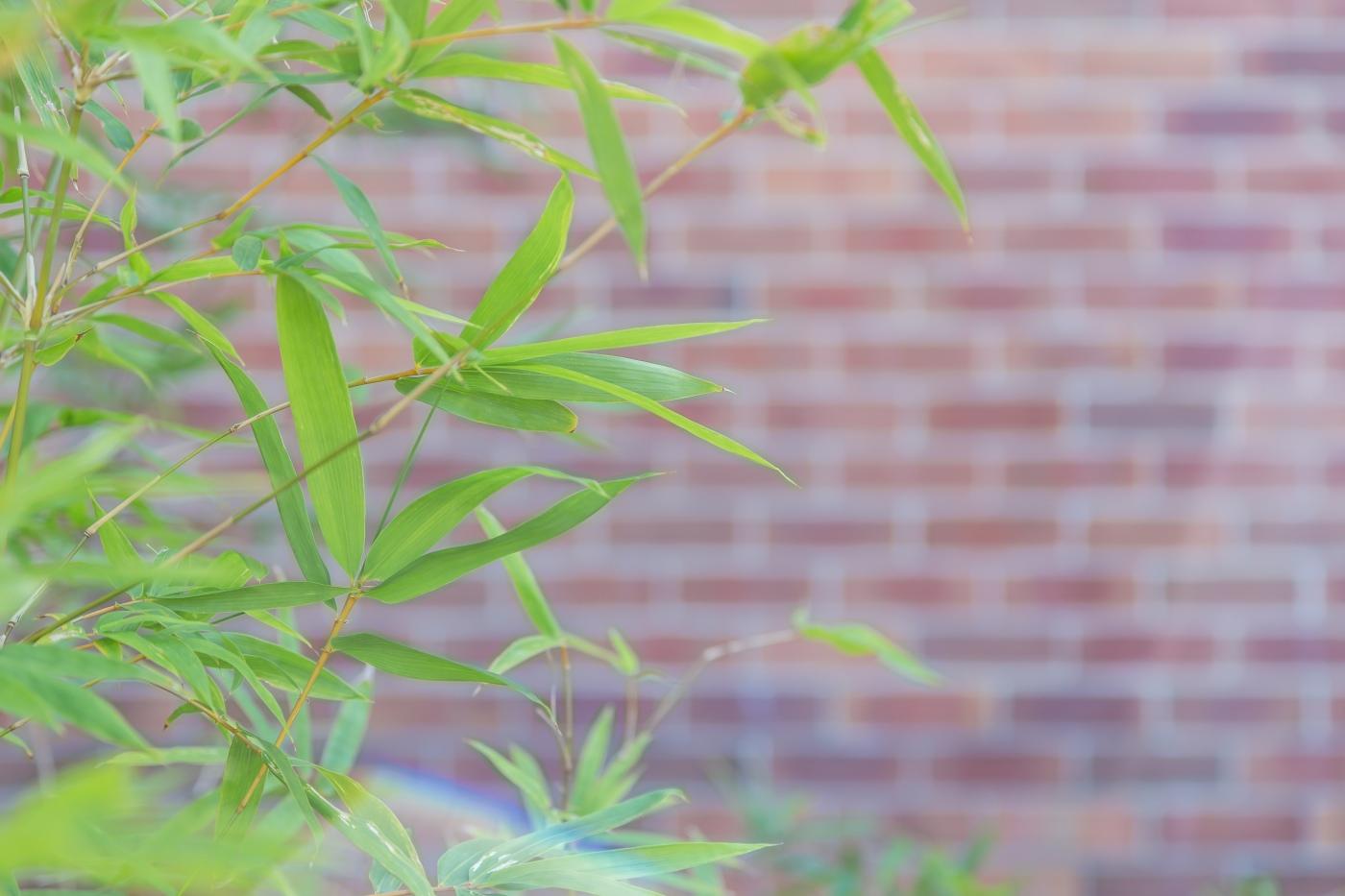 Zen Bamboo - Justin Popp-14