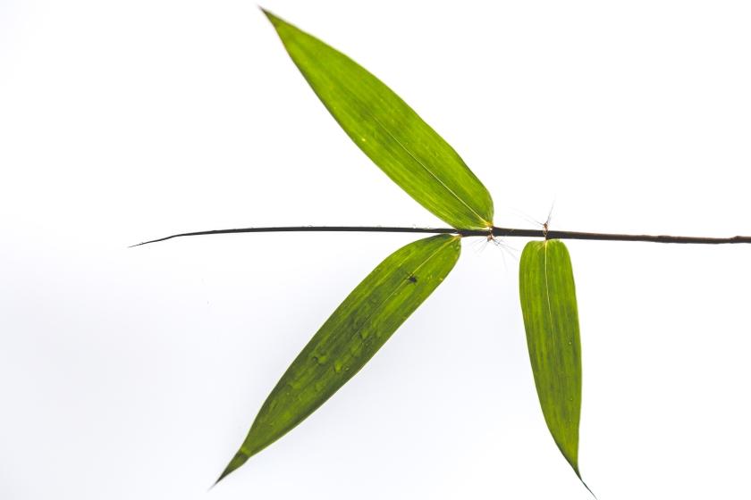 Zen Bamboo - Justin Popp-26