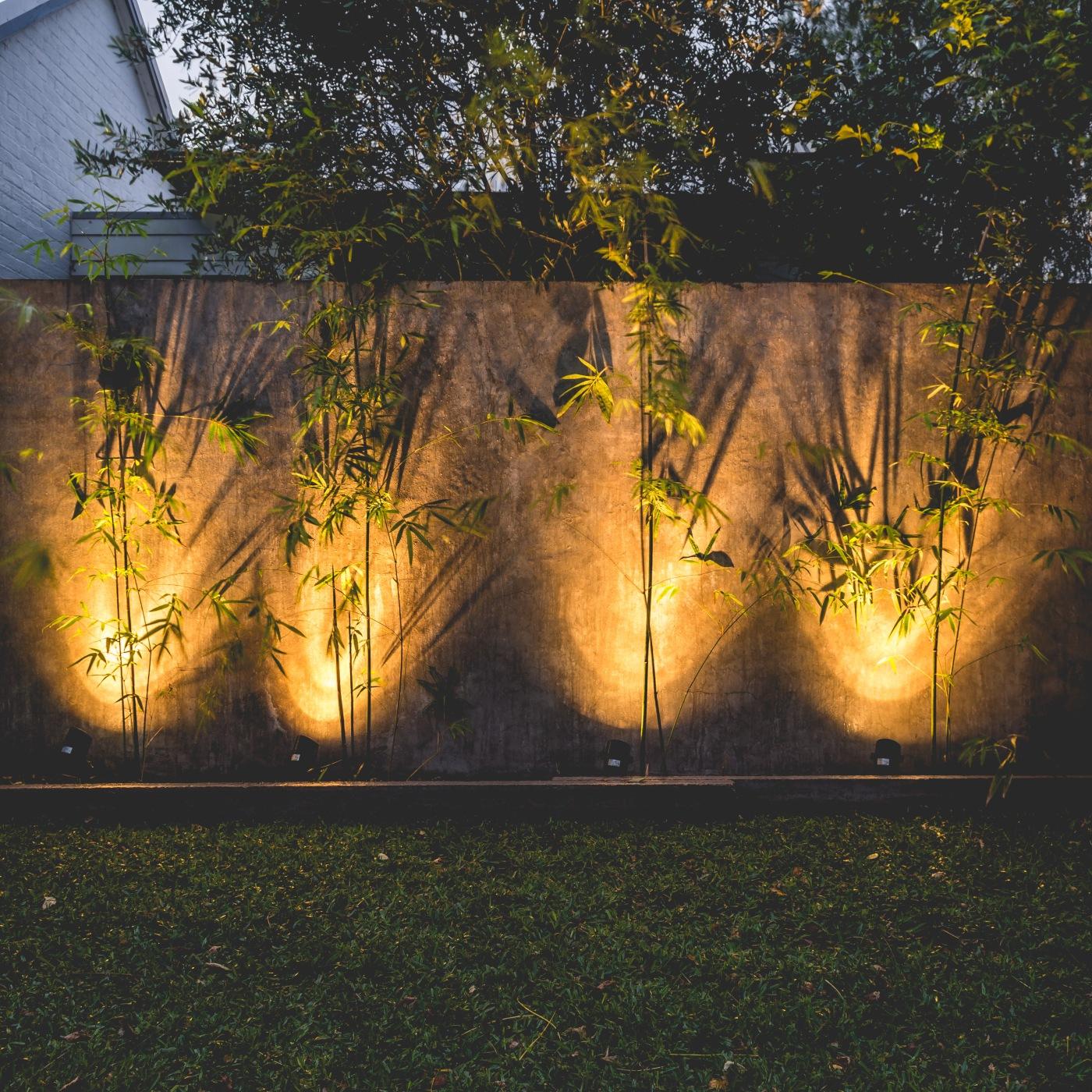 Zen Bamboo - Justin Popp-31